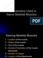 1-Characteristics Used to Name Skeletal Muscles