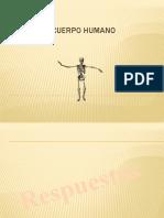 El Cuerpo Humano Respuestas