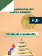Organizacion Cuerpo Humano