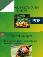 CONTROL BIOLÓGICO EN LA PAPA.pptx