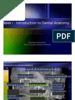 IPT Intro to Dental Anatomy tooth dental dentistry