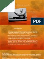 S2. Rehabilitacion de Amputados.pdfpow