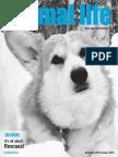 pet rock training manual pdf