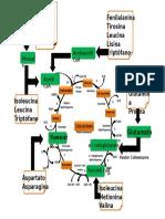 aminoácidos que ingresan al ciclo de krebs