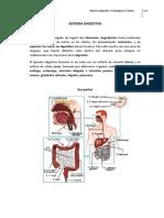 12-Sistema Digestivo. Patologías y Tratam.