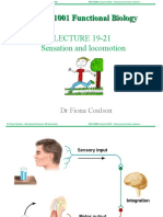 Lecture 19-21 Sensory and Motor Systems