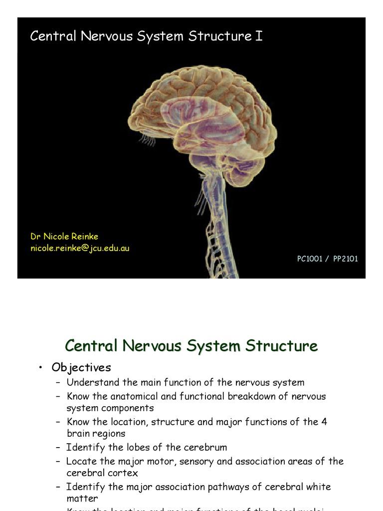 Pc1001 Pp2101 Ns1 View Cerebral Cortex Cerebrum