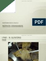 NERVOS - BUCO.pdf