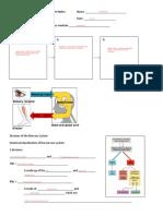 Anatomy& PhysNervousSystem Notes