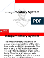 integumentary system lesson plan