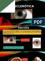 Anatomia Esclera