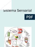 Sistema Sensorial Neurologia