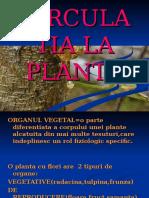Circulatia La Plante