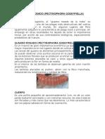 EXPOSICION DE GUSANO ROSADO GUILLERMO.docx