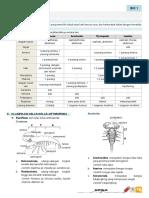 Bio1 Arthropoda