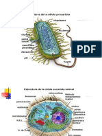 Estructura Microbiana i[1].