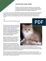 Cara Memelihara Anak Kucing Tanpa Induk