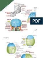 Skull Bones and Landmarks