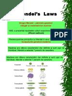 7. Mendel Legi