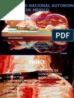 INFORMACION DE CARNICOS