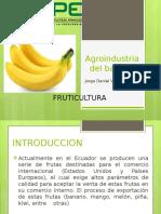 Agroindustria Del Banano