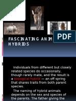 Fascinating Animal Hybrids