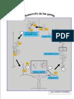 5-Ciclo de Las Yemas (Según Chauvet)