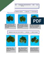 5-Primer y Segundo Grupo de Portainjertos