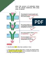 Explaining Facilitated Diffusion (4 Marks)
