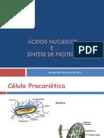 Ácidos Nucleicos e Síntese Proteica - Margarida Barbosa Teixeira