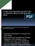 ASPECTOS FITOPATOLOGICOS EN LA PRODUCCION DE SEMILLA DE 123.pptx