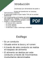 Presentacion Fisio