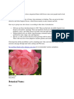 How to Plant Rose