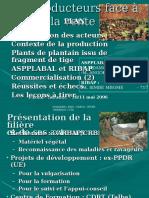 04 Plantain Ribap Aspplabal