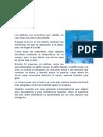 Texto Informativo Los Delfines