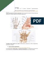AD00. Anatomía de Mano