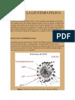 Leucemia Felina Historia Natural