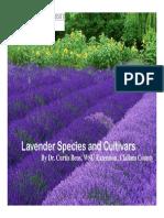 Lavender Varieties Web