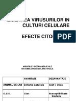 LP 2 - Culturi de Celule