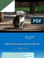 Lec 4 - Neurons Tony Krantis