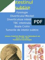 Curs intestinul subtire