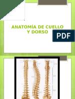 Anatom_a de Cuello y Dorso