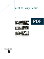 Management of Dairy Heifers