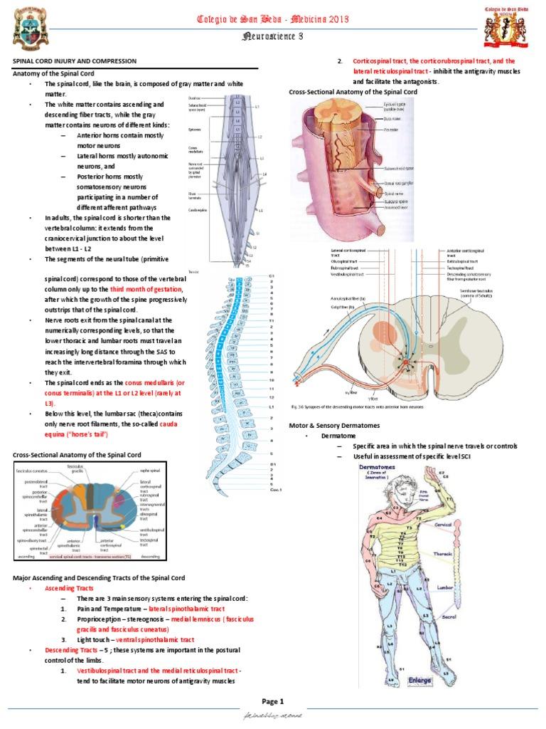 Spinal Cord | Spinal Cord | Vertebral Column