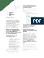 Las Fitohormonas y sus funciones en las plantas.