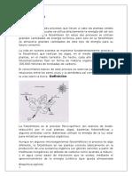 Investigación La Fotosíntesis (Bioquímica)