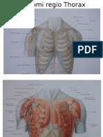 Anatomi Regio Thorax