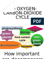 Oxygen-carbon Dioxide Cycle