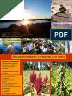 Informe 2quinoa y Amaranto 2010