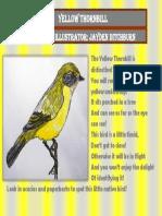 Yellow Thornbill Jayden